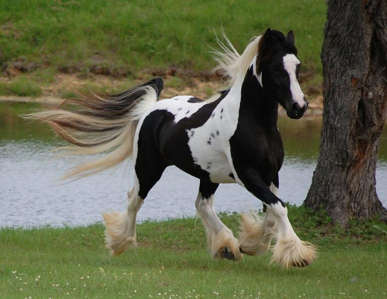 Horse Breed: Few Most Expensive Ones