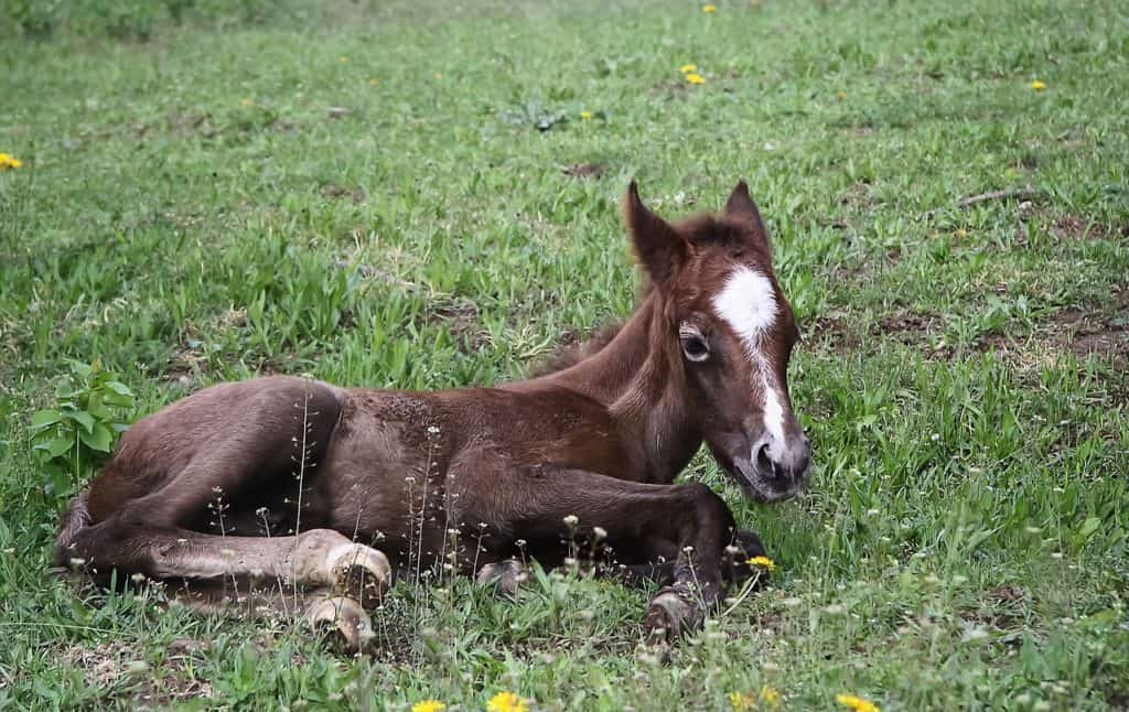 A Detailed Study On Foals