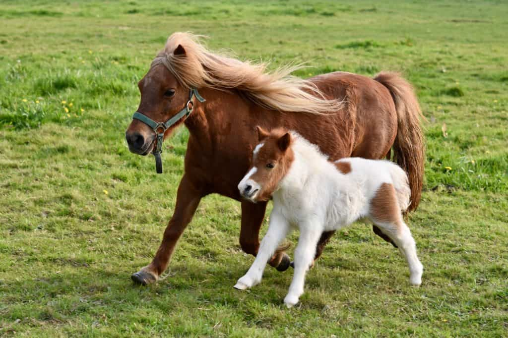 Interesting Facts On Ponies For Sale