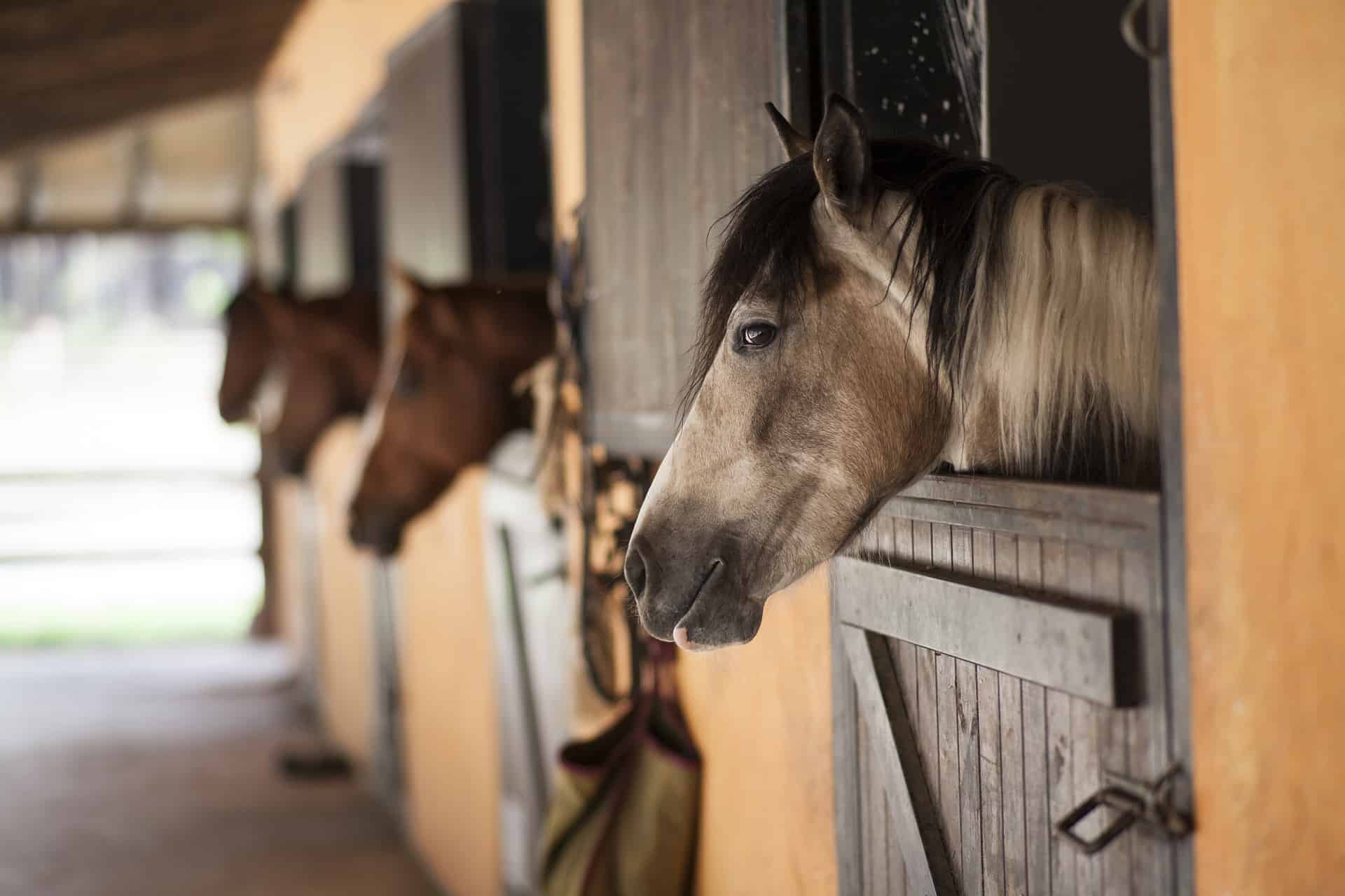 Horses For Sale Markets All Around The World