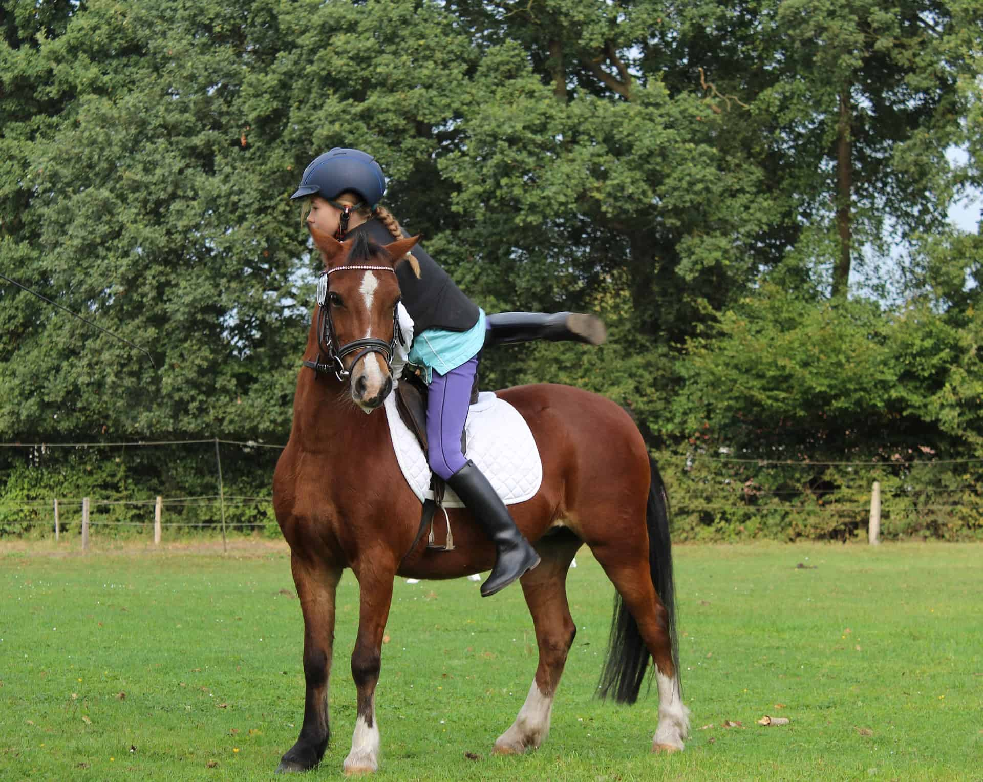 Tips For Beginner Riders In Ponies For Sale