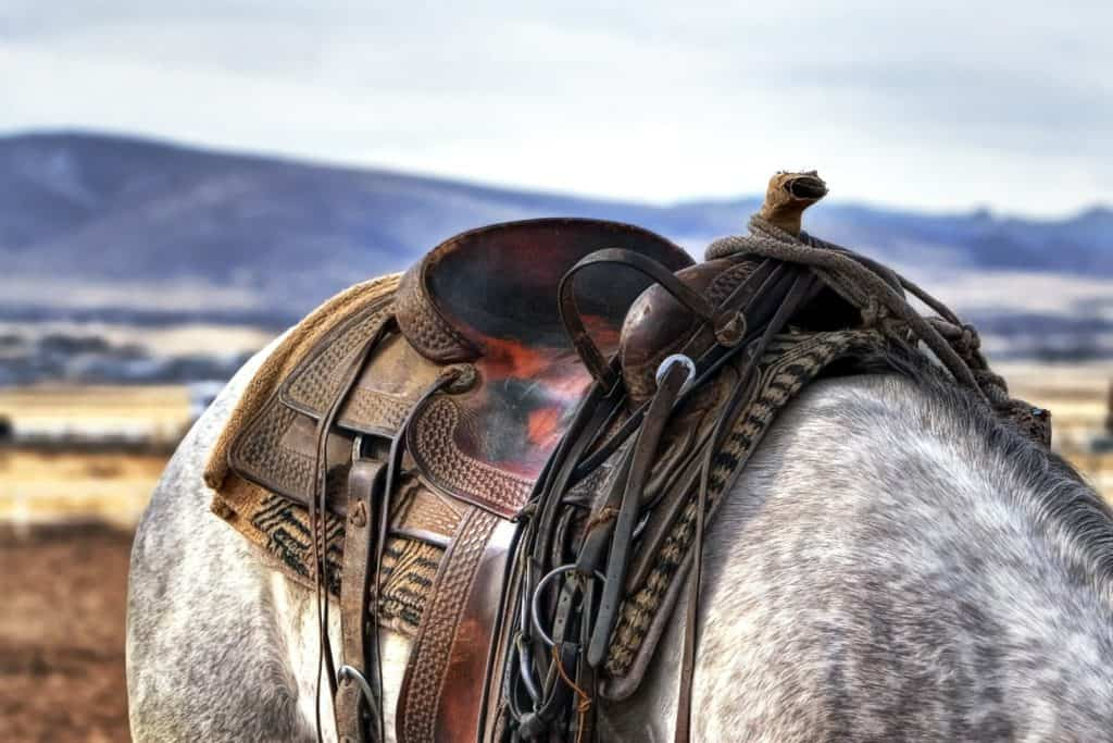 Saddle A Support For Riders