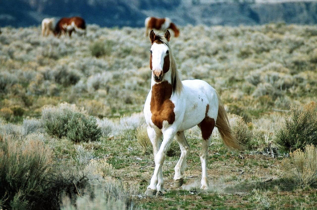 Wild Horses: Best Places To See Them In North America