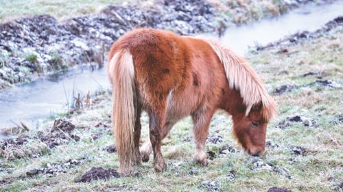 Thorough Discussion To Know About Eating Habitat Of Horse