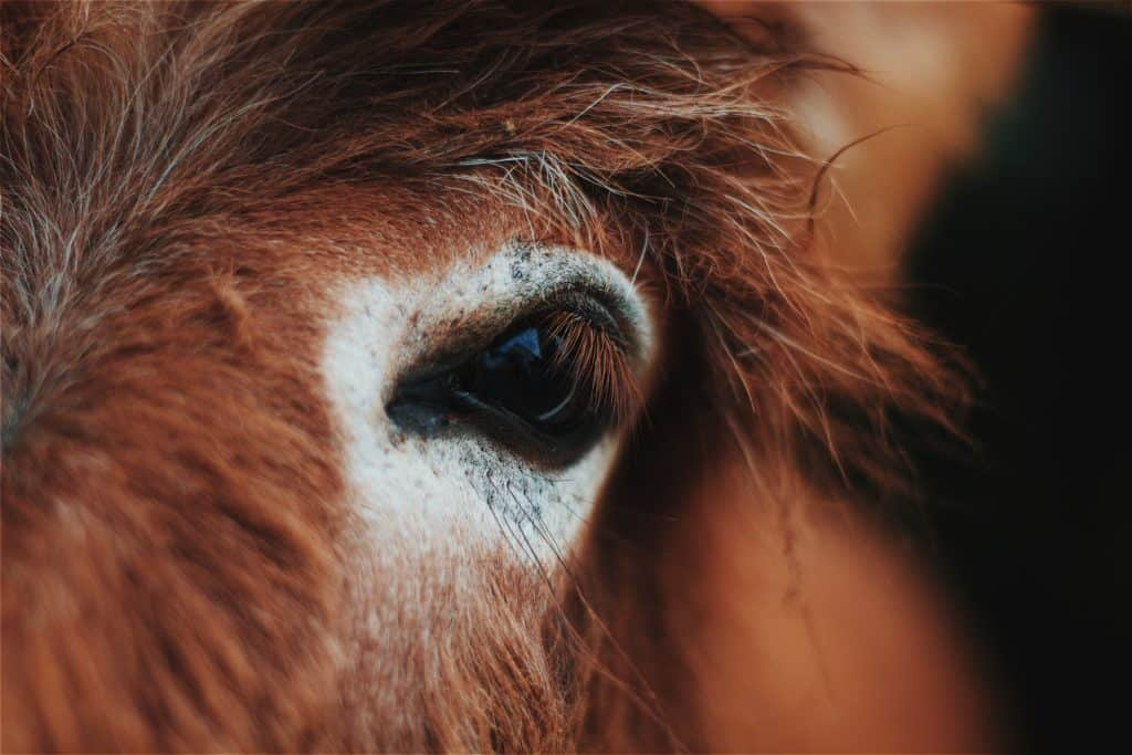 Horse's Vision: Understanding How Horses See
