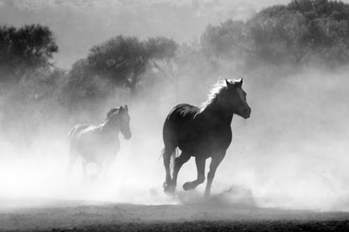 Understanding The Secret Lives Of The Horses Today