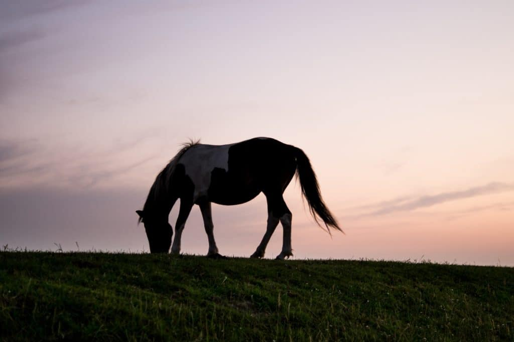 Tail Lights Provide High Visibility For Your Horse