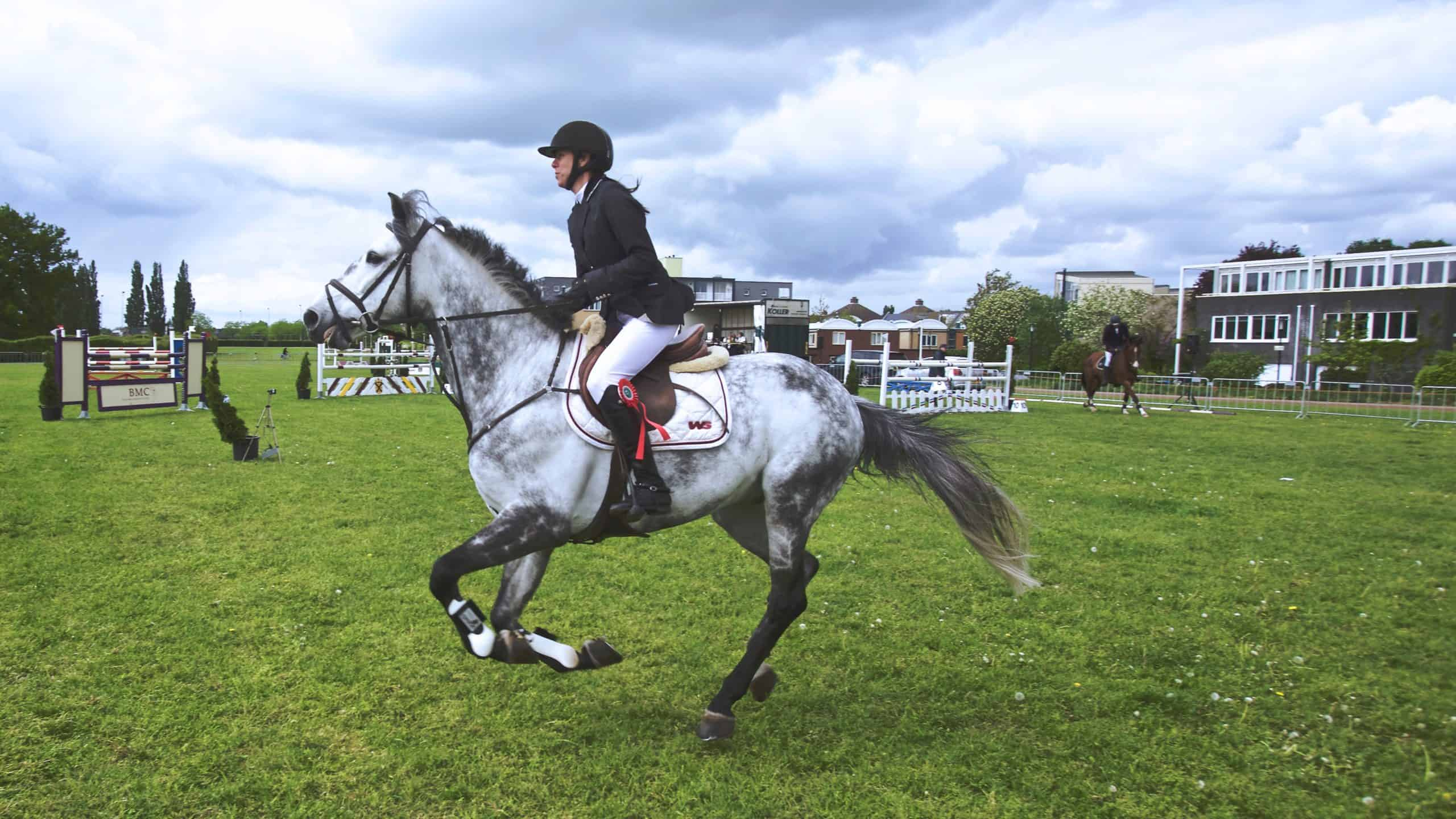 Tips for Handling Your Amazing Horse