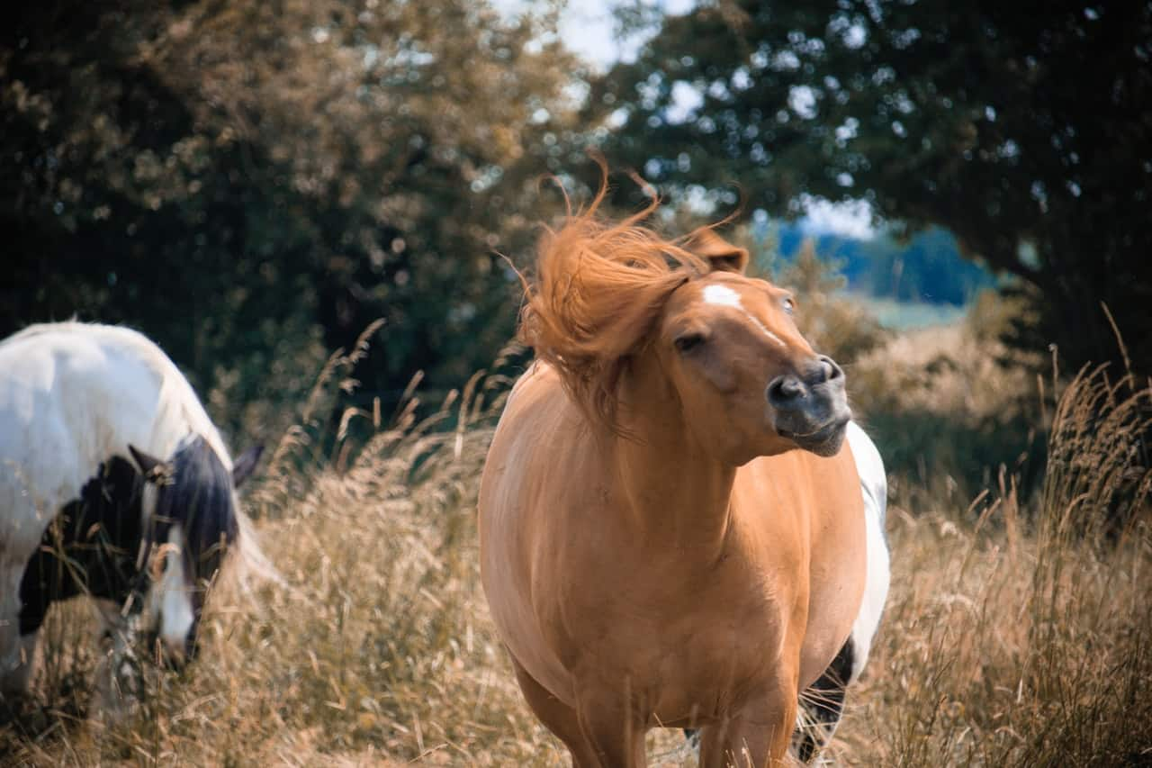 Guide to Taking Care of WildHorses