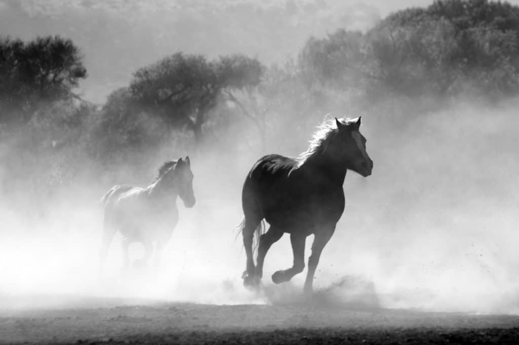 Guide To Taking Care Of Wild Horses