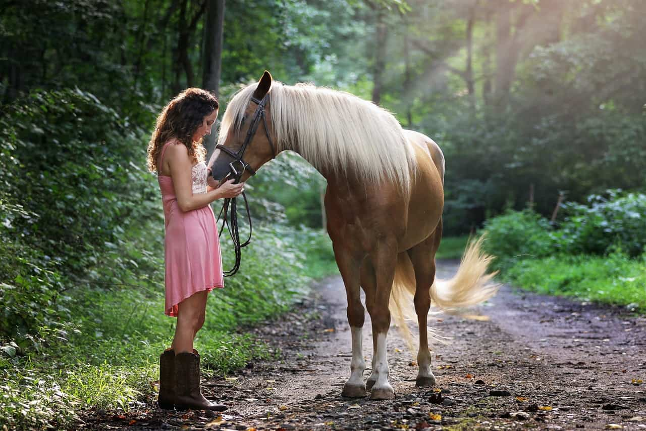 How to Choose the Best Horse For Your Needs