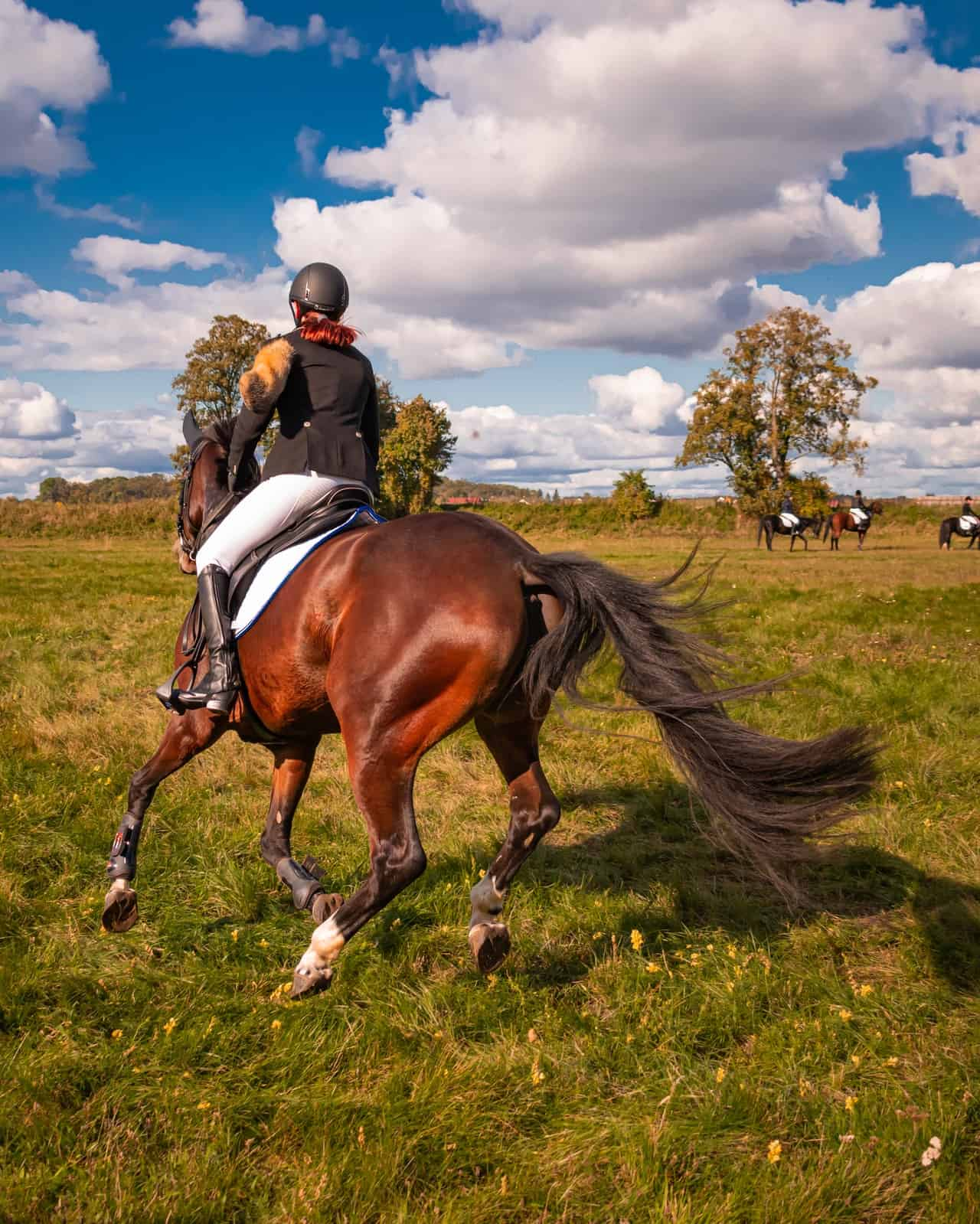 The Best Of Top Horses