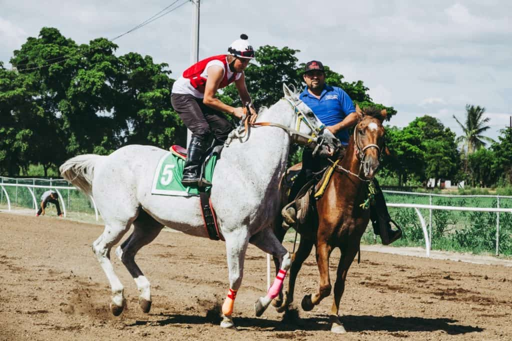 What Horses and Riders Needed to Know About Competitions