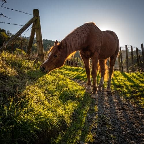 Popular Horse Breed And Training For Its Own Safety