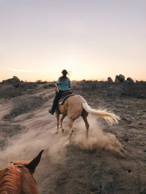 Types Of Ponies To Consider For Horseback Riding