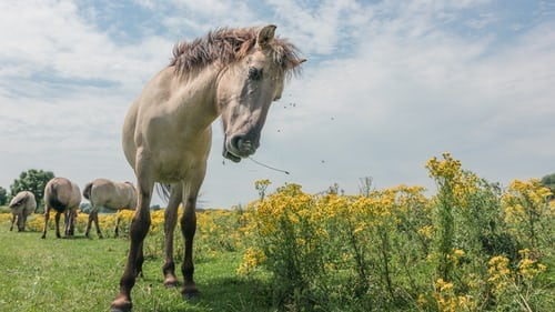 Mustang Horse Breed - A True Affirmation Of Friendship