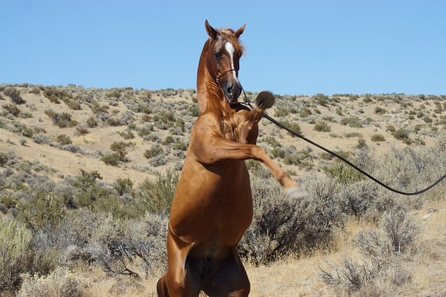 Reasons You Should Go For Mustang Horse Riding