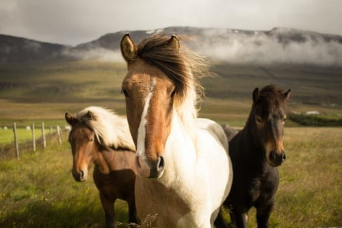 What Is the Best Way To Know About Horse Life Span?