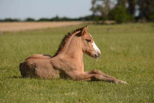 Which Are The Most Expensive Horse Breeds?