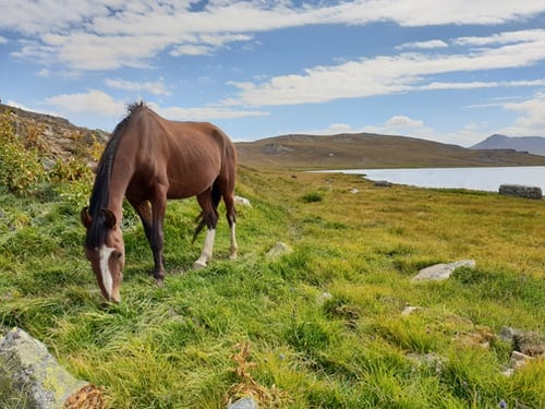 The Best Ways To Care For Wild Horses