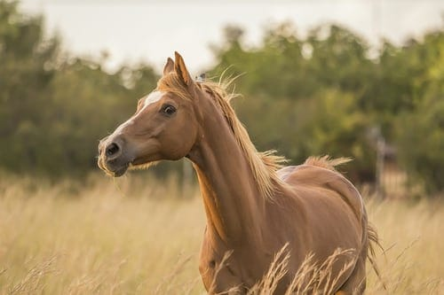 How To Keep Your Horse Healthy And Safe