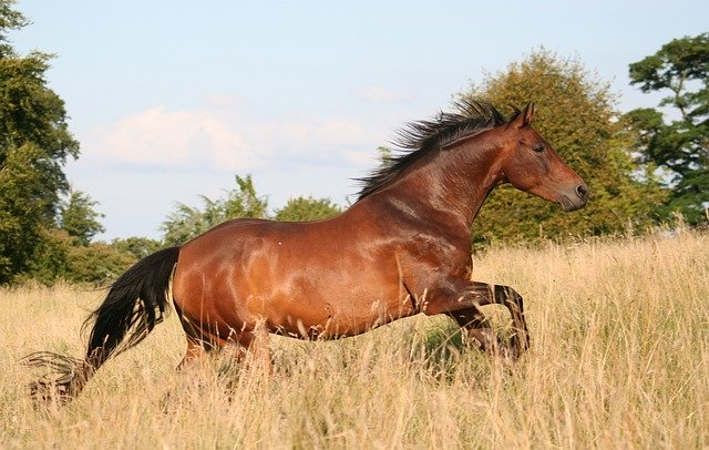 Mustang Horse Breeds Famous In The US
