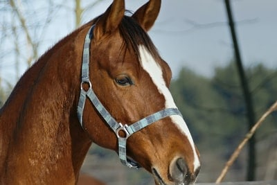 Best Horse Riding Lessons For Beginners