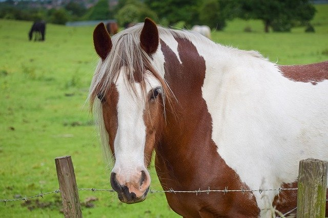 Different Mustang Horse Breeds Of The United States