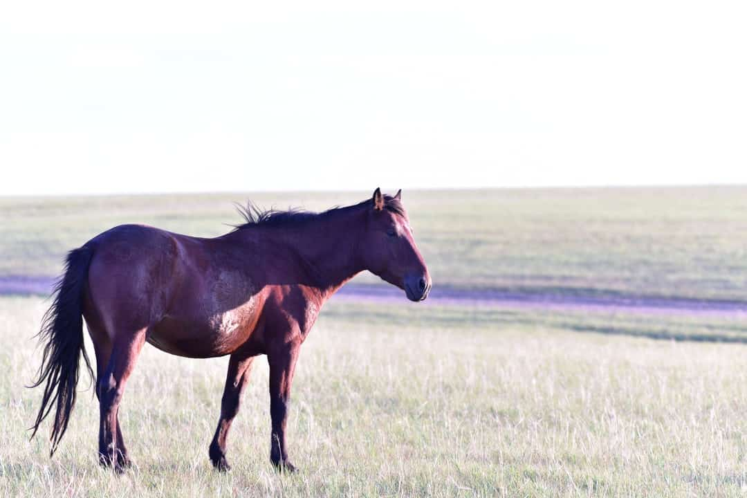A brown horse standing on top of a grass covered field