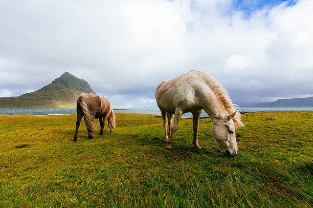 A brown horse grazing on a lush green field