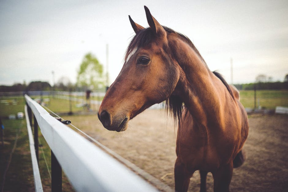 A brown horse standing next to a fence
