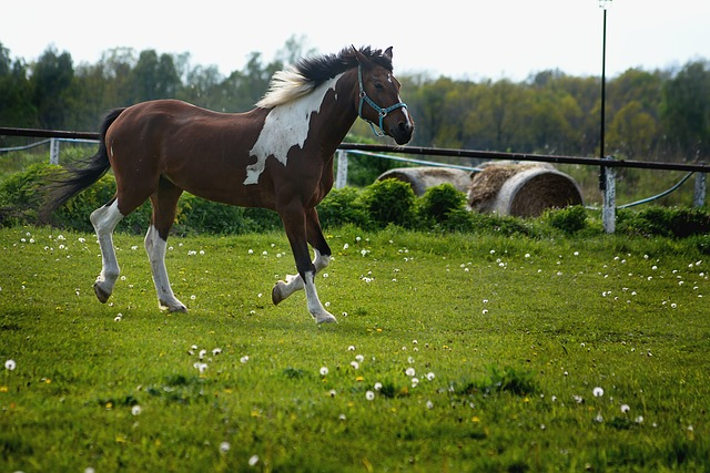 A brown horse standing on top of a lush green field